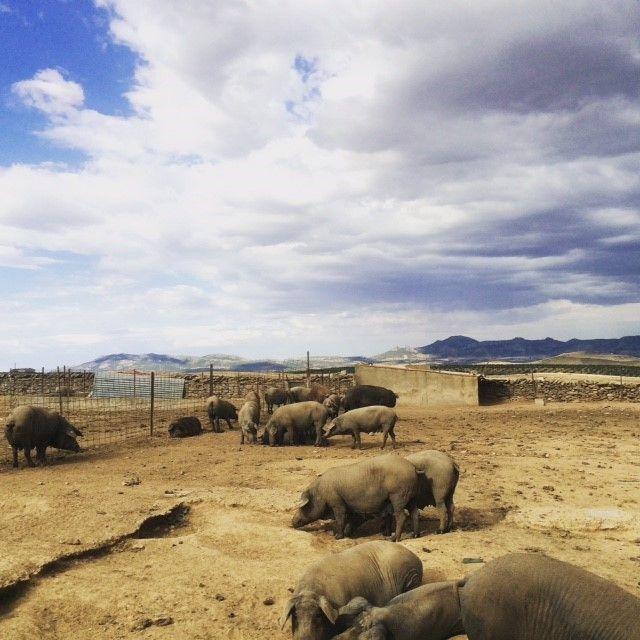 Espectaculares vistas de la Sierra de Hornachos desde el criadero de cerdos en Ribera del Fresno.