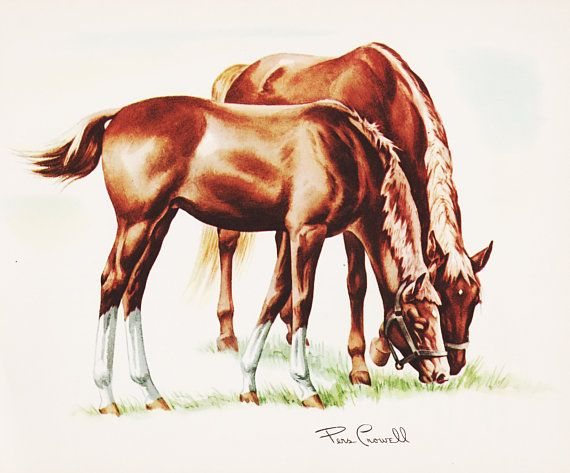 Horse Art Vintage Print Artwork Decor