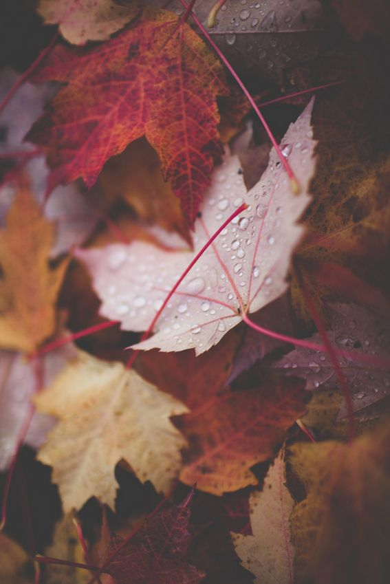 "autumn leaves | ""Every leaf speaks bliss to me, fluttering from the autumn tree."" Emily Bronte"