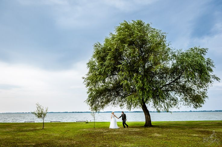 #tree :) www.digilab.hu #wedding, #eskuvo #weddingphotography