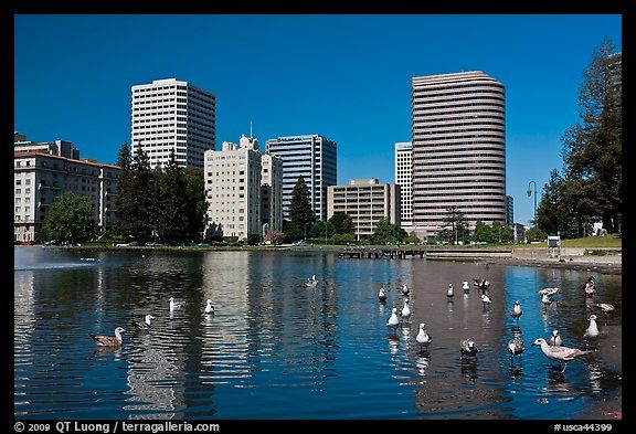 Lake Merritt in Oakland, California, USAPictures Photos, Bays Area, Oakland California, Northern California, California Bays, Lakes Merritt, Oakland Yo, Colors Pictures, Interesting Sight