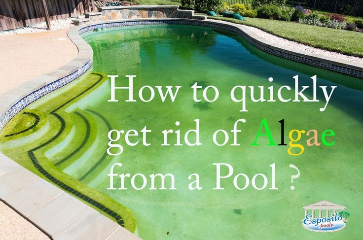 How To Treat And Remove Pool Algae A Guide Pool Cleaning In Cypress Esposito Pools A Single