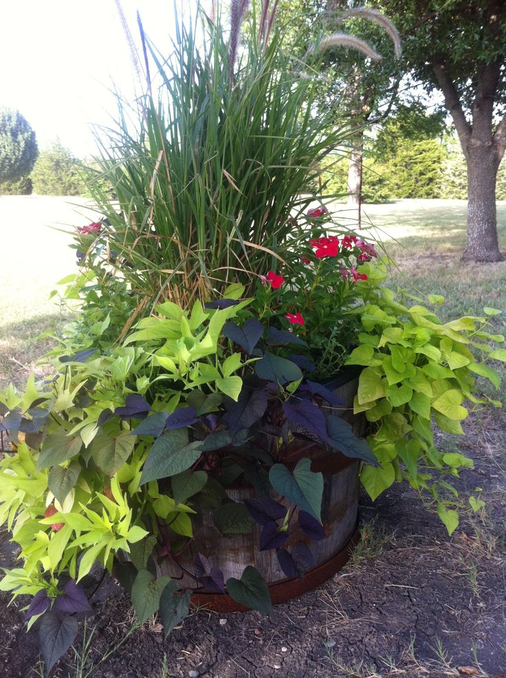 My whiskey barrel planter stuff we have actually made for Wooden barrel planter ideas