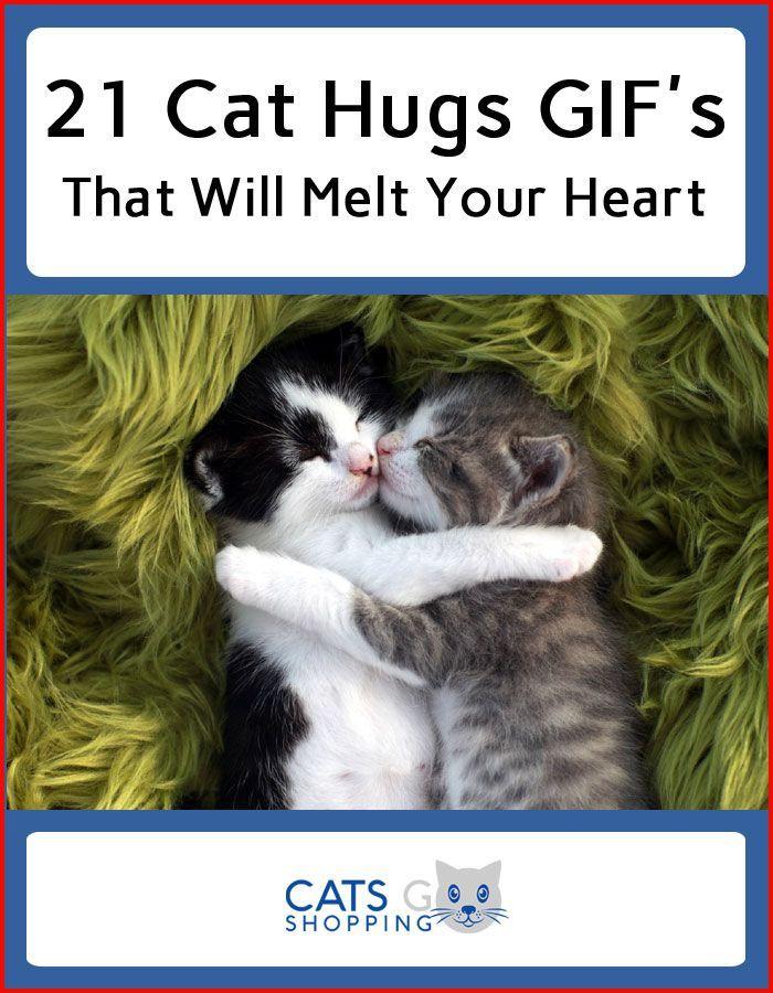 Cat Hug Gifs