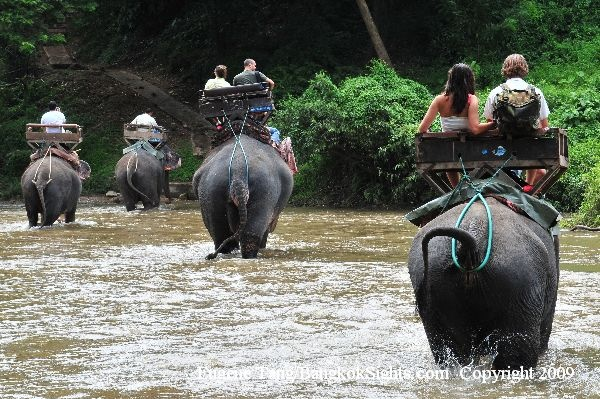 Elephant riding in Chiang Mai.