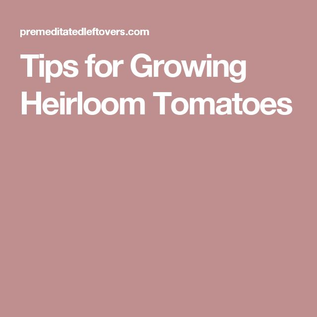 Tips for Growing Heirloom Tomatoes