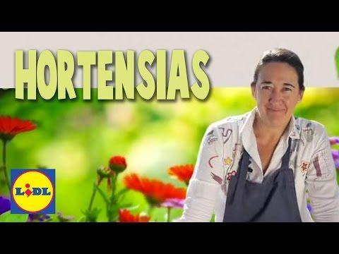 Plantación y Cuidado De Hortensias - Lidl Jardín - YouTube