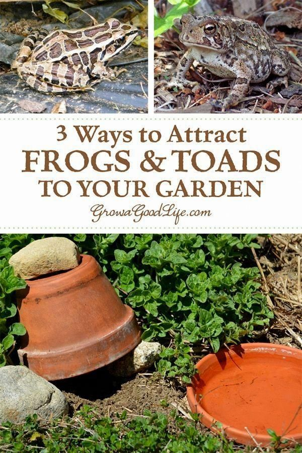 So What Can The Home Garden Enthusiast Do First Recognize That Aid Is On The Way In Vegetable Garden Planner Organic Vegetable Garden Gardening For Beginners