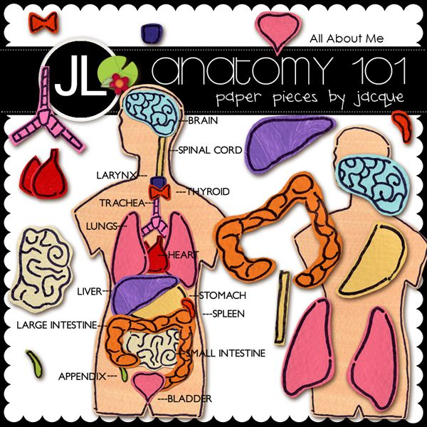 Organs in the body: Homeschool Back To Schools, Felt Science, Inspiration Ideas, Cool Homeschool, Human Anatomy, Back To Schools Homeschool, Science Homeschool, First Grade Science, Homeschool Anatomy