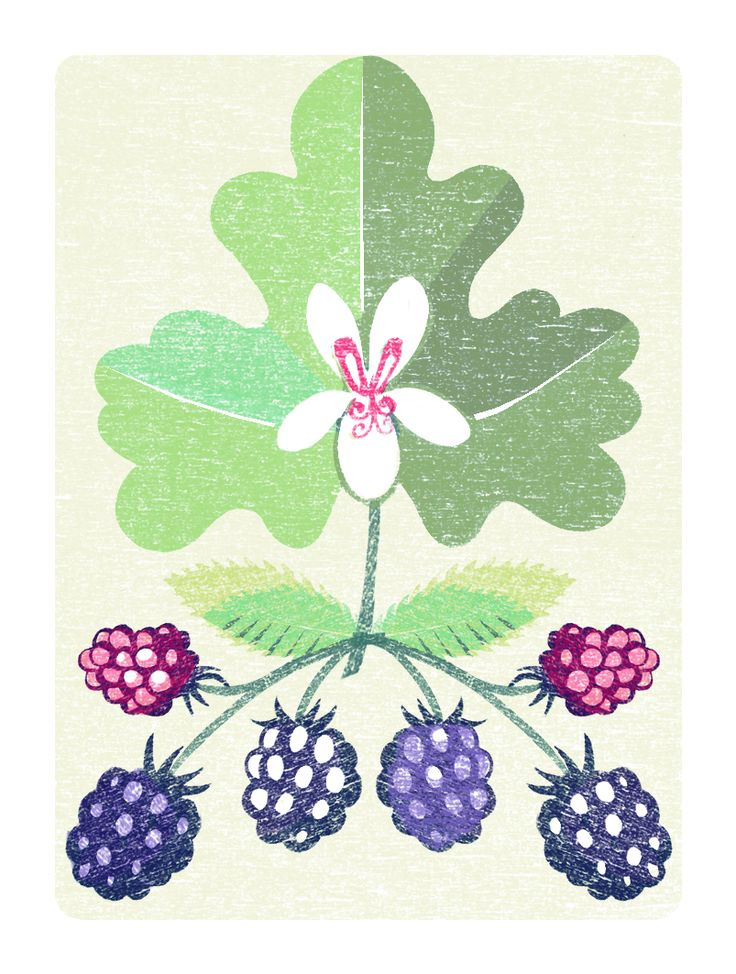 September illustration for Gardens Illustrated