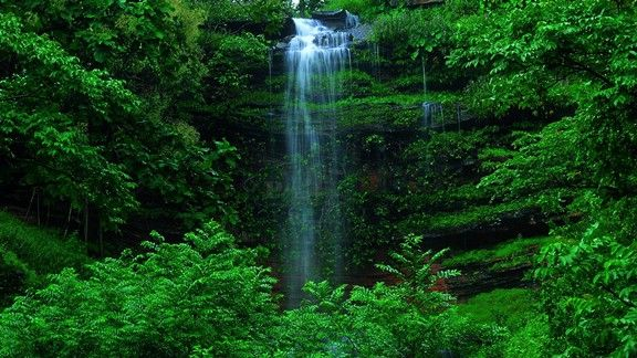 Saklı Şelale #wallpaper #şelale #orman #waterfall #forest