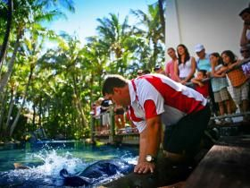 Free educational feeding session at the Living Reef