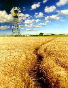 Campos de trigo en Argentina. Que bello!:)