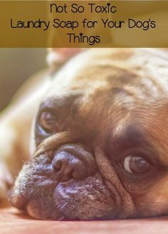 357 Best Home Decor For Pets Images On Pinterest Animals