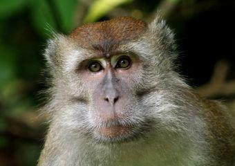 Origine ed evoluzione del linguaggio: parallelismi e risposte dal mondo degli animali