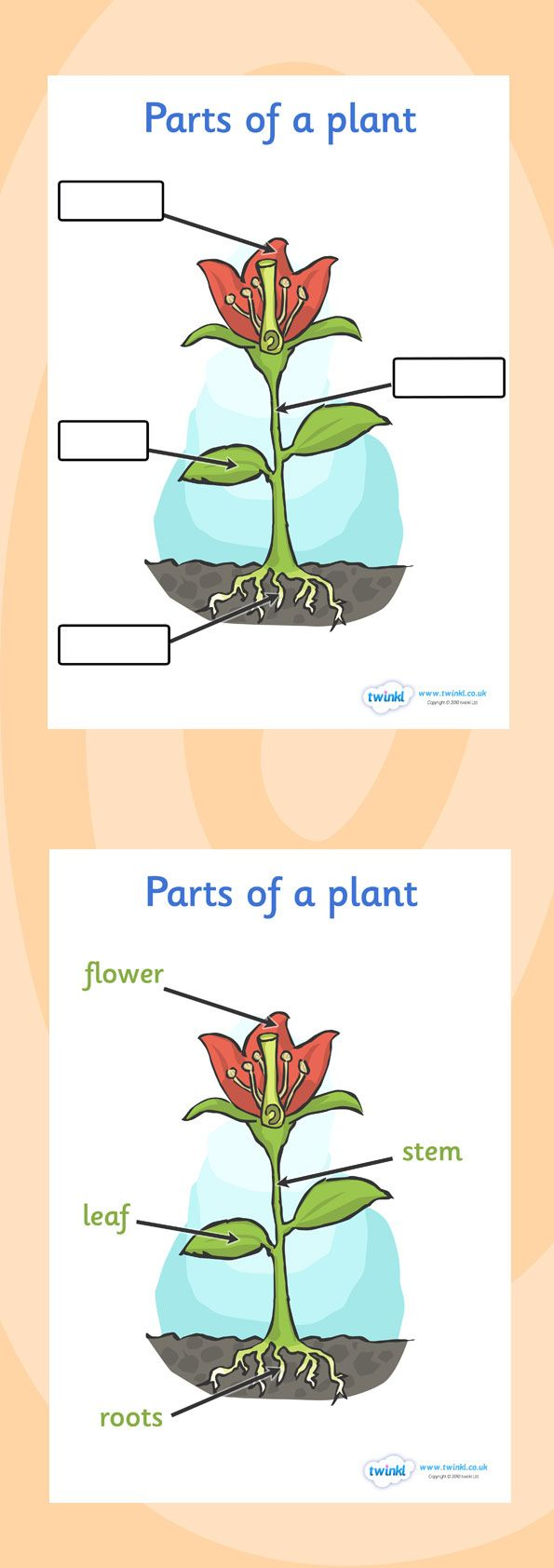 Twinkl Resources >> Parts of a Plant Foundation >> Classroom printables for Pre-School, Kindergarten, Elementary School and beyond! Plants, Growth, Labels, Worksheets