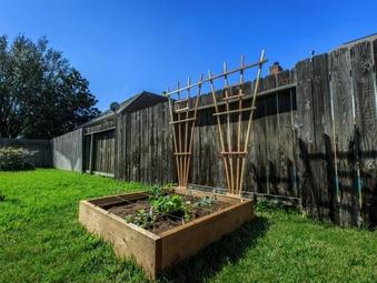 17 Best Images About Houston Fruit Veggie Garden On