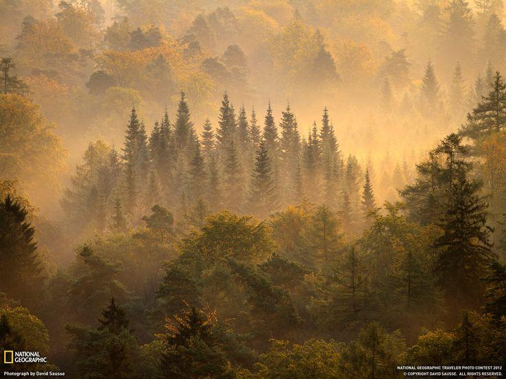 Forest, Vorderweidenthal, a municipality in Südliche Weinstrafle district, in Rhineland-Palatinate, western Germany.