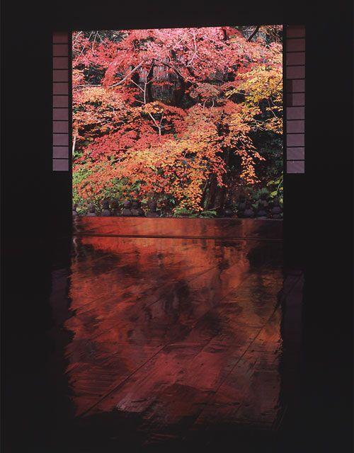 4 Season colors are reflected in black with polished wooden floor, Jissoin Iwakura, Kyoto, Japan.