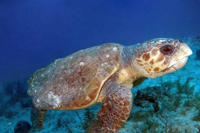 sea-turtle-conservancy-magnificent-meanderings-lightning-mcqueen_1_16412-001