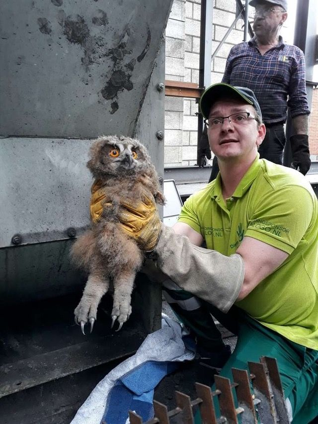 This Owl Being Saved From A Coal Grinding Machine