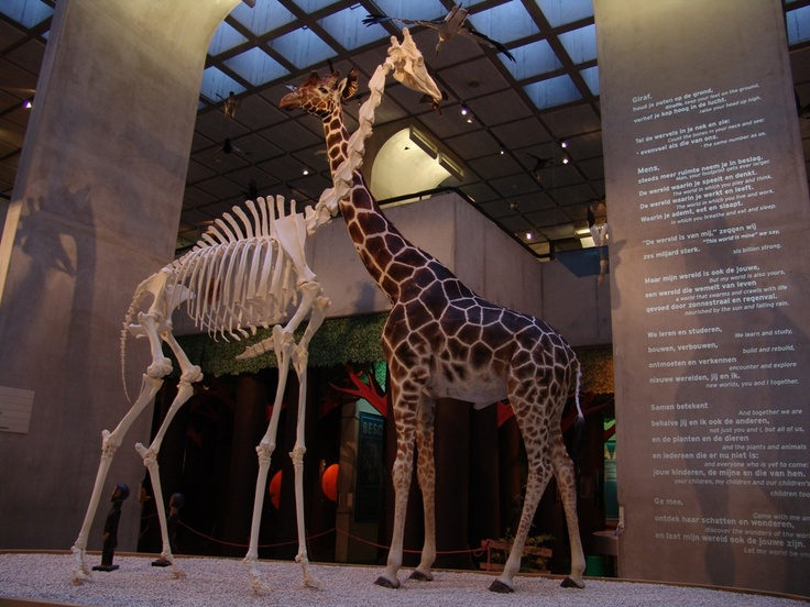 Museon, Den Haag, nu met hele mooie fototentoonstelling van dieren