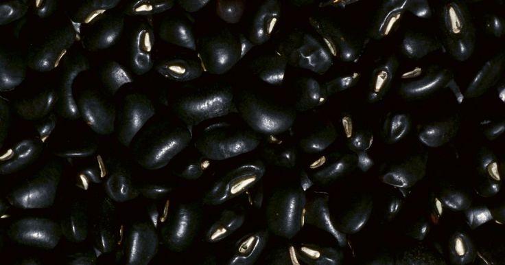 Cómo cocinar frijoles negros. Cocinar frijoles negros puede ser un desafío para alguien que esté acostumbrado a hacer frijoles pintos, alubias u otros frijoles de cocción más rápida. Como los frijoles negros son densos y duros, requieren un poco más de esfuerzo para cocinarse. La preparación es la clave para conseguir frijoles negros bien cocinados, justo a tiempo para ...