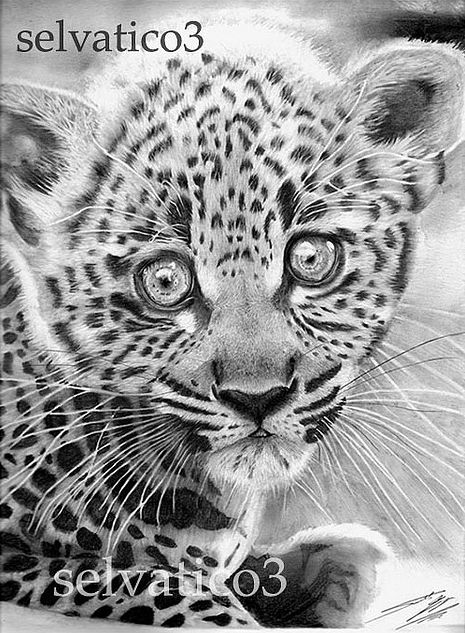 42 INCREDIBLY REALISTIC AND ADORABLE PENCIL ILLUSTRATIONS