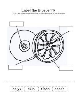 Label the Blueberry worksheet FREEBIE!  Visit www.littleearninglane.com for more ideas & printables!