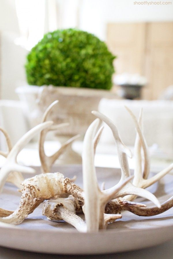 Atchison Home | Antlers | Boxwood: