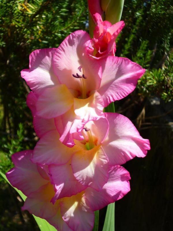 Bellissimo fiore - Katia