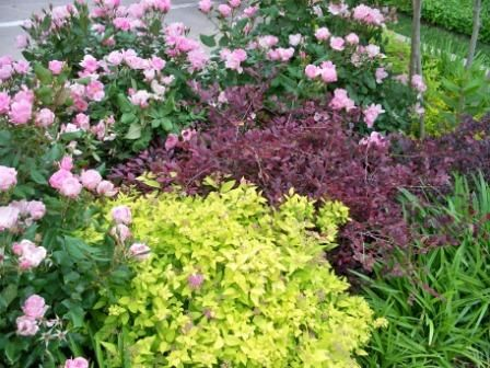Here is a planting combination using lime mound spirea - What is lime used for in gardening ...