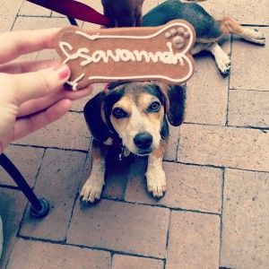 You Already Know About Savannah S Dog Friendly Dining Options But Where Can Bring Fido To Get That Much Needed Hours Of Sleep Your Furry Friend