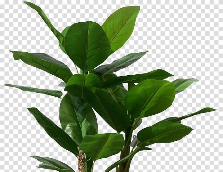 Green Leafed Plant Musa Basjoo Banana Leaf Tree Plant Tropical Banana Leaves Transparent Background Png Clipart Trees To Plant Banana Leaf Tree Plants