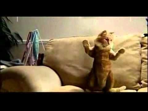 Gato bailando música de Michael Jackson - YouTube