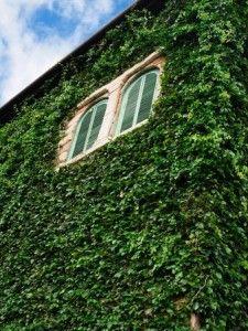 5 шагов Как украсить стены растениями-лианами?