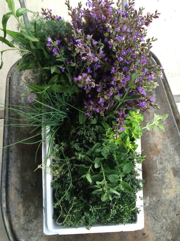 Herbs from the garden on their way to Simmer on the Bay.