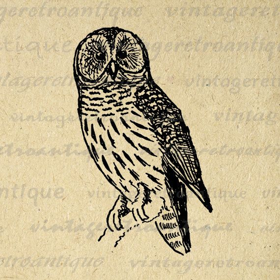 Digital Owl Graphic Image Antique by VintageRetroAntique on Etsy
