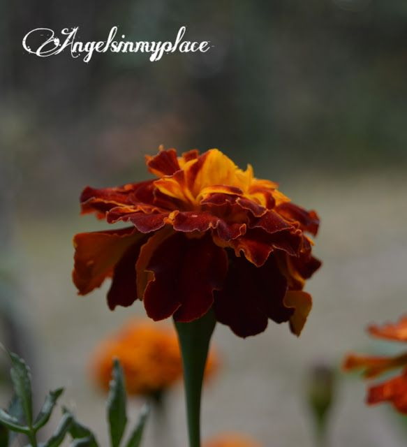 zatrzymany czas: Autumn flowers