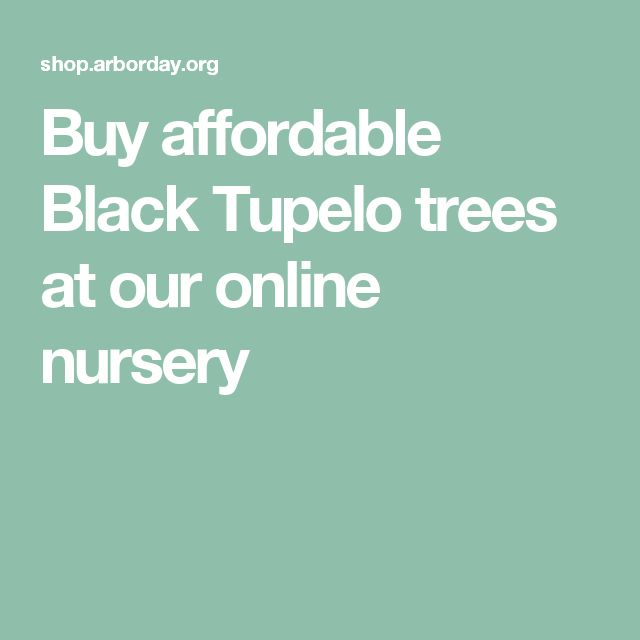 Buy affordable Black Tupelo trees at our online nursery