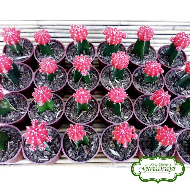 Moon Cactus aka Grafted Cactus Philippine Wedding