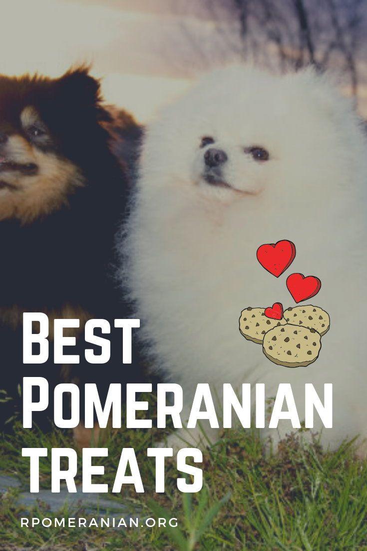 Bacon Flavored Dog Biscuits Recipe Pomeranian Dog Pomeranian