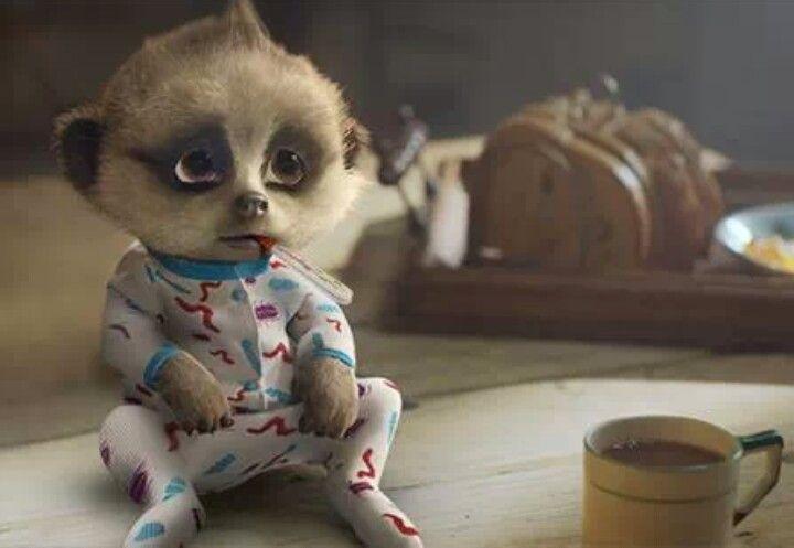 Oleg has sniffels