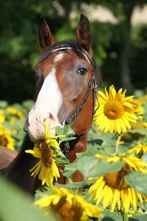 When you have that sudden craving for sunflower seeds... This horse has the right idea.