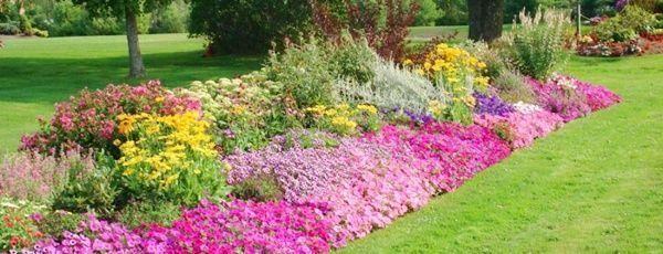 1000 ideias sobre Plantas Resistentes Ao Sol no Pinterest
