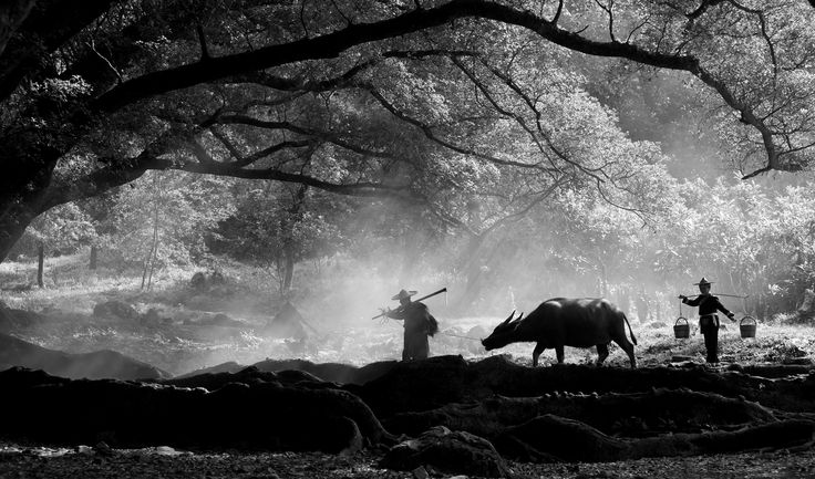 Work - Book: Distant Song #distantsong #nature #work #manuelcorreia #xiapu #china #exposição #museunogueiradasilva #braga