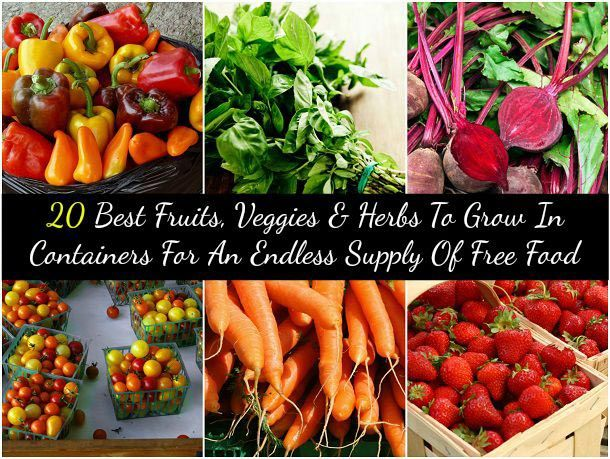 If you love fresh fruits, vegetables and herbs but don't want to always drive to the grocery store to get them, consider container gardening. It is a rapidly expanding movement with the rising cost of food and people becoming more conscious of what they are eating. You now see apartment baclconies lined with containers and even in the smallest of spaces, you can grow enough…   [read more]