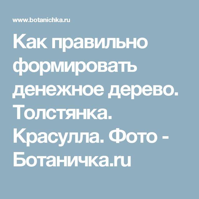 Как правильно формировать денежное дерево. Толстянка. Красулла. Фото - Ботаничка.ru