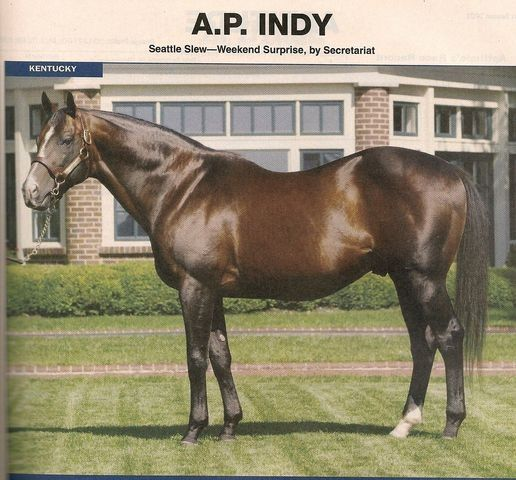 17 Best Images About A P Indy On Pinterest Horse Racing