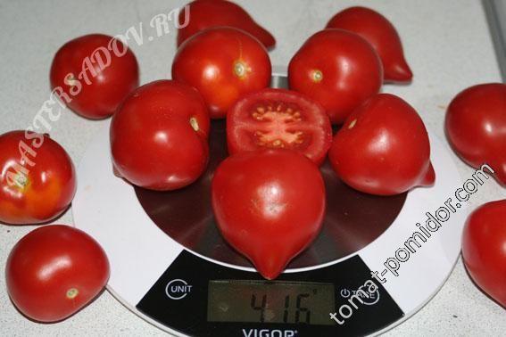 Форум - выращивание томатов, огород, дача - Гибрид 2 Тарасенко